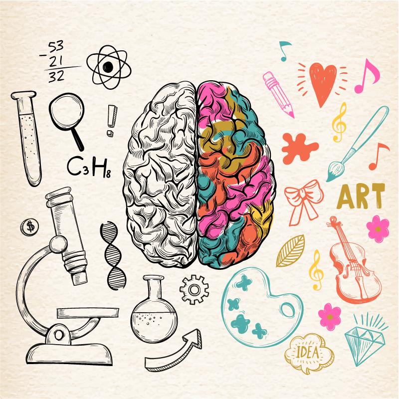 Desenvolvimento do cerebro